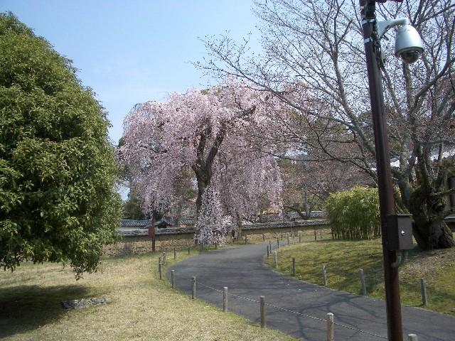 京都花見旅行3_a0047004_14301128.jpg
