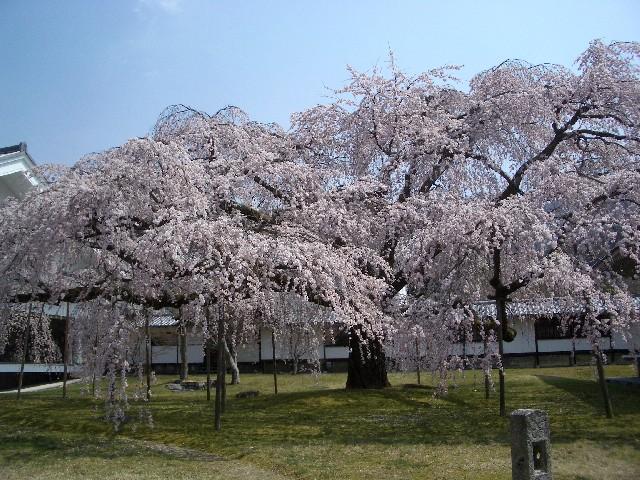 京都花見旅行3_a0047004_14332371.jpg