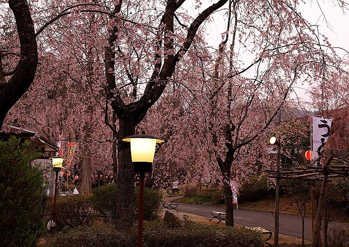 """""""しだれ桜の並木道""""NO.1_a0140608_7142956.jpg"""