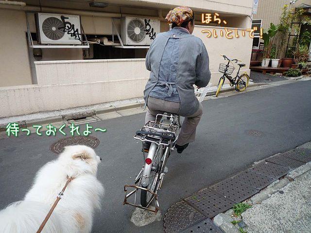 勢い散歩_c0062832_5521327.jpg