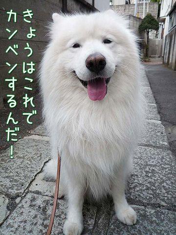 勢い散歩_c0062832_5525159.jpg