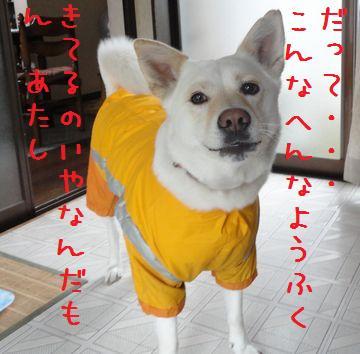 f0195543_212109.jpg