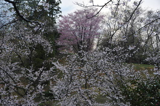 奥卯辰山健民公園_c0093046_1250433.jpg
