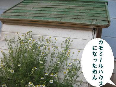 b0151748_1823367.jpg
