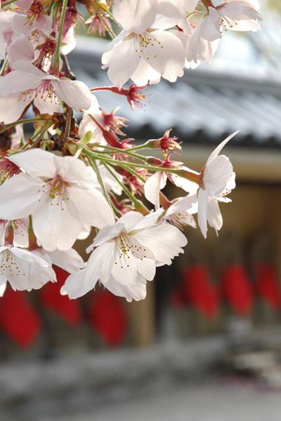 お花見さんぽ_b0016049_1652483.jpg