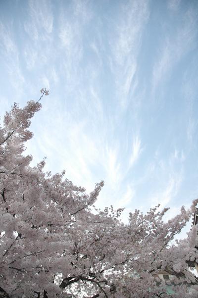 お花見さんぽ_b0016049_16525214.jpg