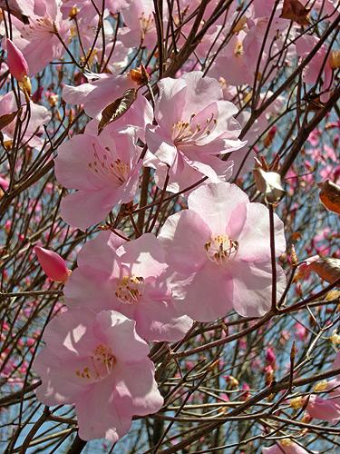 4月23日 またまたの赤城自然園_a0001354_21102260.jpg