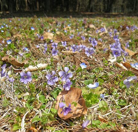 4月23日 またまたの赤城自然園_a0001354_2112925.jpg