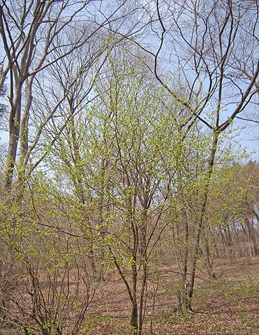 4月23日 またまたの赤城自然園_a0001354_21292614.jpg