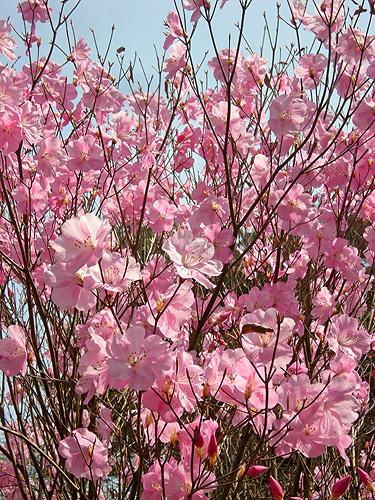 4月23日 またまたの赤城自然園_a0001354_2193894.jpg