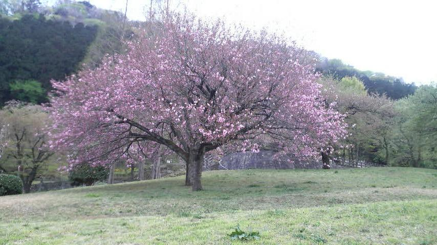 それでも、花は咲く。_f0028256_483167.jpg