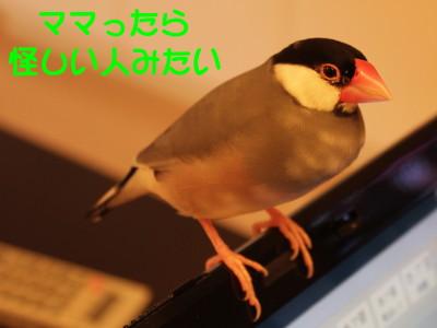 b0158061_21452019.jpg