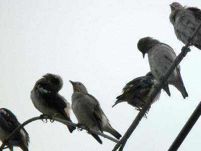 今日の鳥さん_e0028387_2163074.jpg