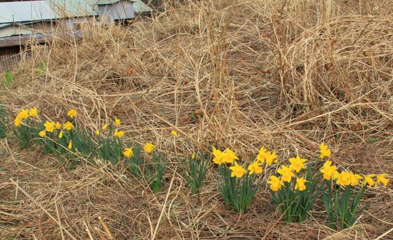 アトリエの22日の芝置屋根の草花_e0054299_1559561.jpg