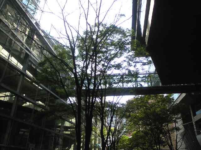 都会の木々_b0080104_1625518.jpg