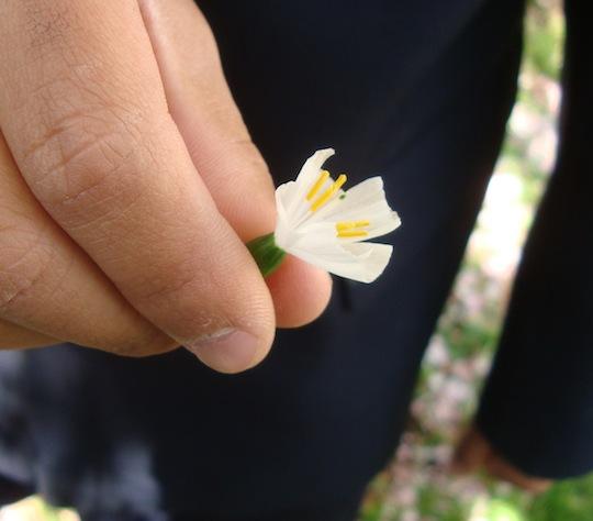 春の自然〜生き物を調べよう〜動画クリップ活用_c0052304_7171474.jpg