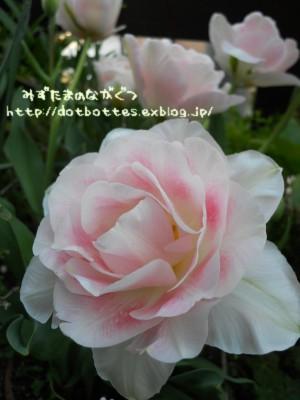 d0170109_22542743.jpg