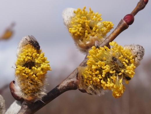 2011年4月24日(日):植物学の日(ホントに)_e0062415_19383864.jpg
