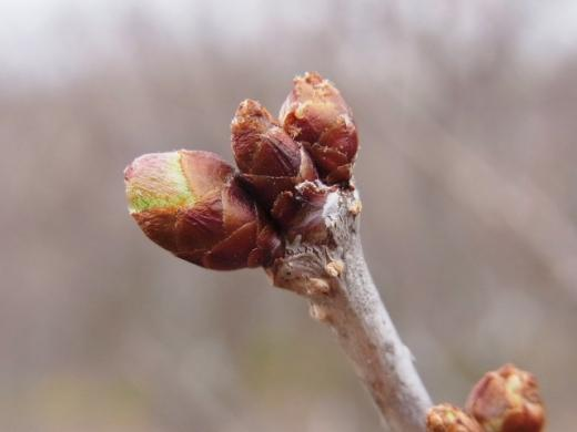 2011年4月24日(日):植物学の日(ホントに)_e0062415_1940377.jpg
