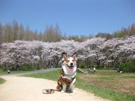 水元公園へ~♪_f0155118_11122690.jpg