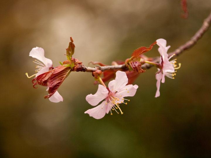 桜_e0169421_21472945.jpg