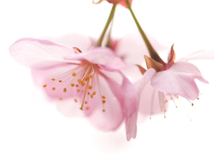 桜_e0169421_221504.jpg