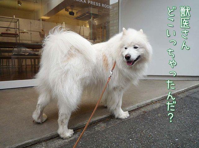 金曜おば散歩_c0062832_4171389.jpg