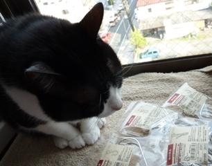 無印良品横ブレしにくい猫 空編。_a0143140_044180.jpg