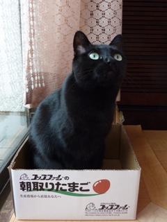 およびでにゃい猫 空しぇるのぇるろった編。_a0143140_218571.jpg