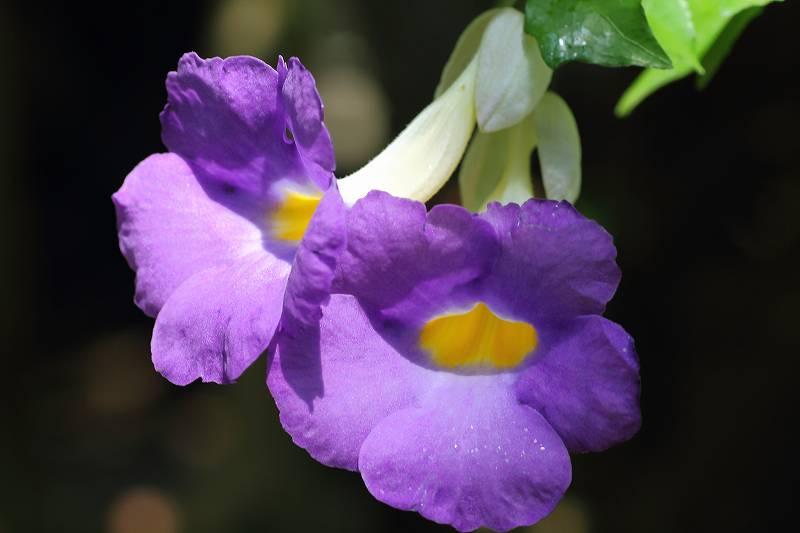 ルリジサの花が綺麗でした_f0044056_7364241.jpg