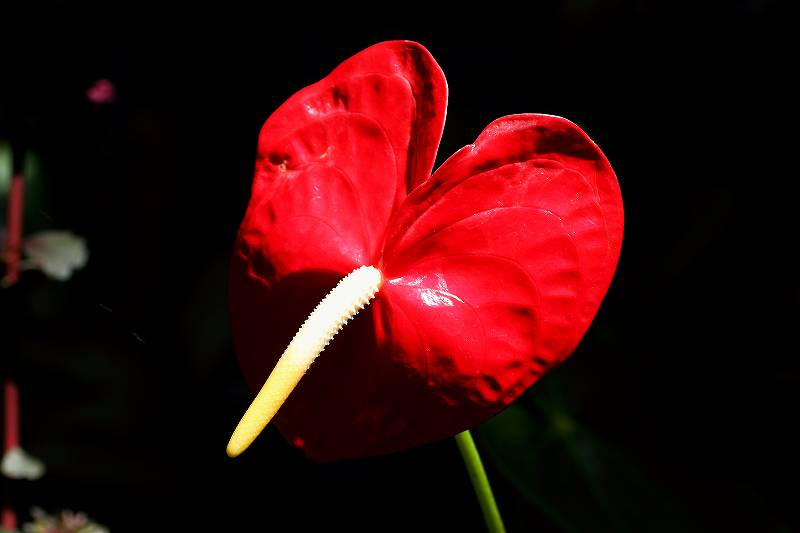 ルリジサの花が綺麗でした_f0044056_7375630.jpg