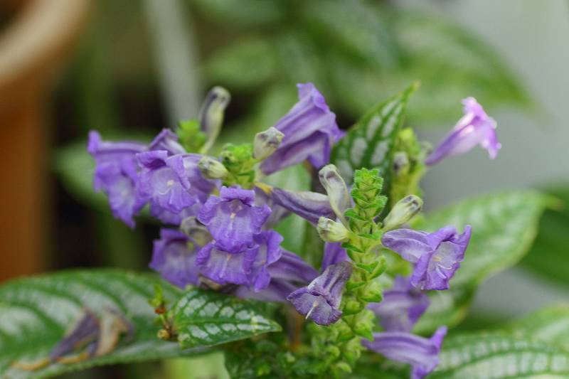ルリジサの花が綺麗でした_f0044056_7391952.jpg