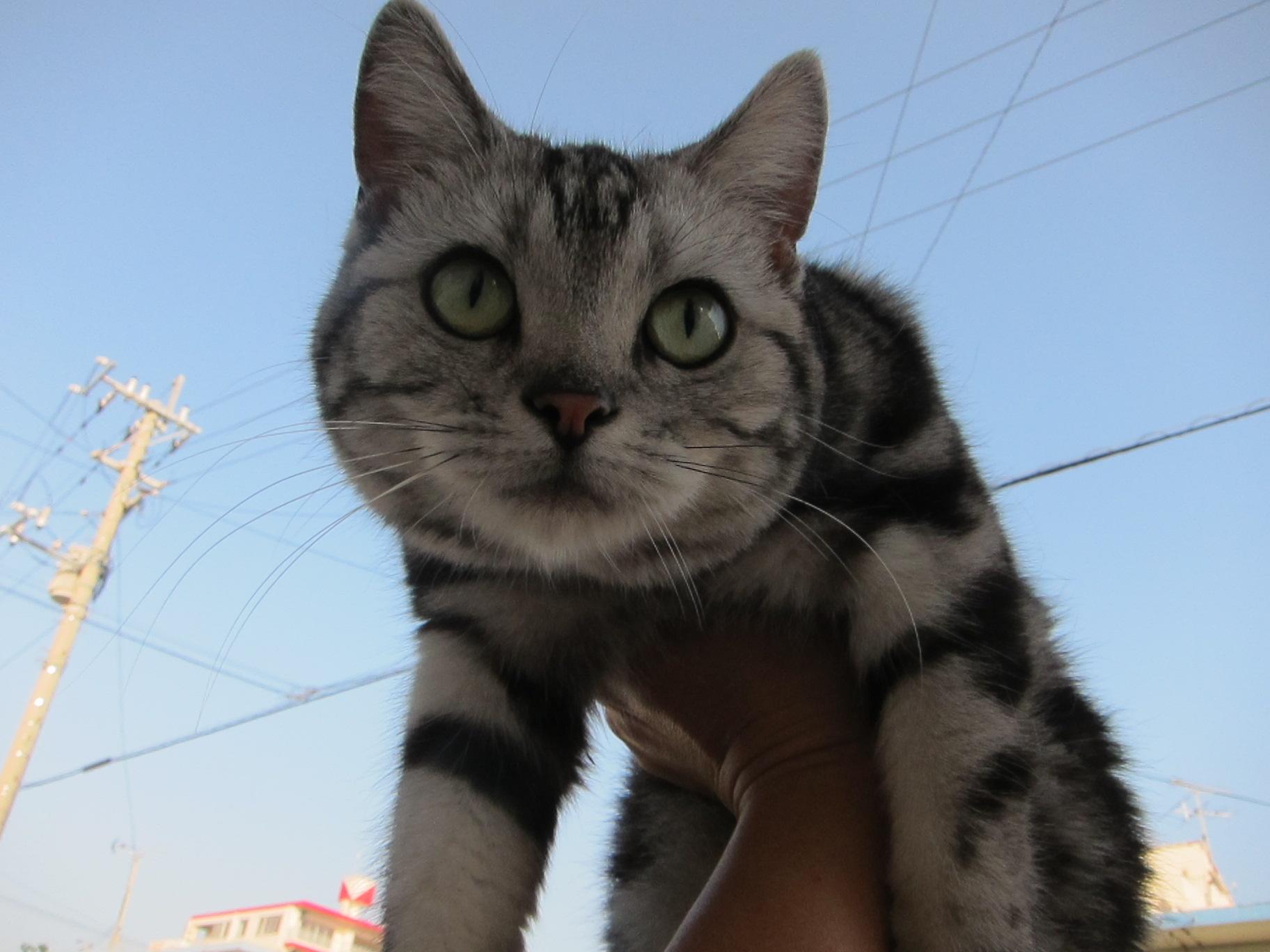 tanuko is angry._c0153966_1749577.jpg
