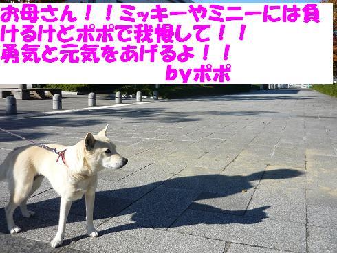 e0139167_0225552.jpg