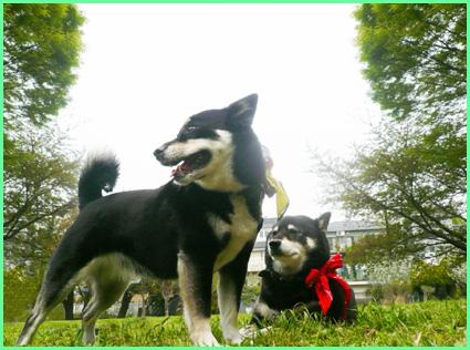 春のお友達大放出。青山公園、寄ってらっしゃい!_e0236072_17434926.jpg