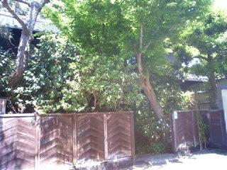 鎌倉、いい天気_b0011075_16373221.jpg