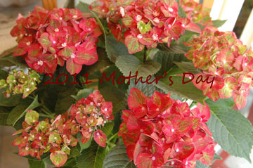 2011 Mother\'s Day!!_e0130779_15524557.jpg