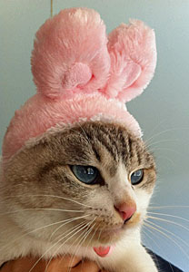 Lovery cat♥_b0195783_18261162.jpg
