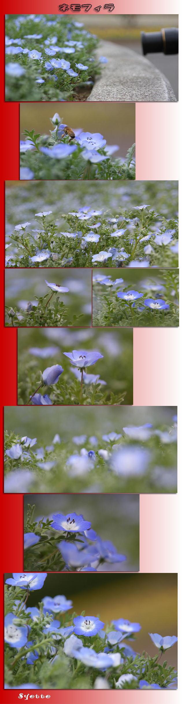 f0164592_7525293.jpg