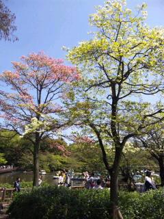 No.1322 4月24日(日):長渕剛さん 被災地へ。_b0113993_211214.jpg