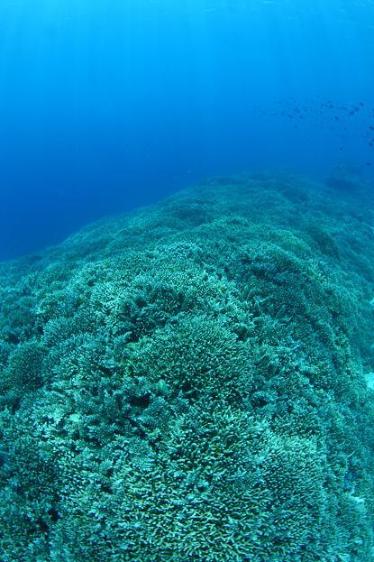 サンゴの絨毯_a0089097_1613298.jpg