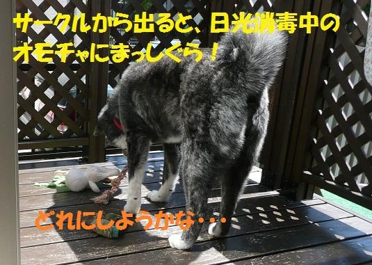 f0121712_1095145.jpg