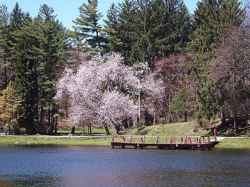 カメの公園 青空とサクラ_e0147716_15418.jpg