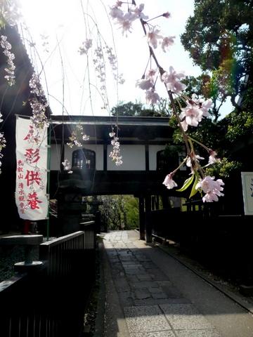 自転車で上野へ、猫の木、ハンバーグ_c0201334_0414962.jpg