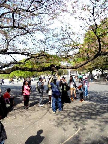 自転車で上野へ、猫の木、ハンバーグ_c0201334_0424553.jpg