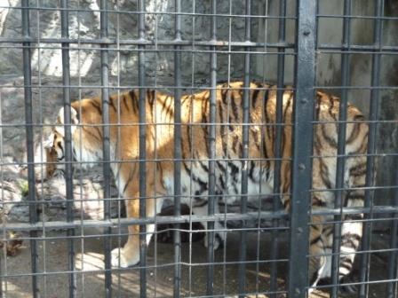 動物園でも椅子が気になる^^_c0152341_14103158.jpg