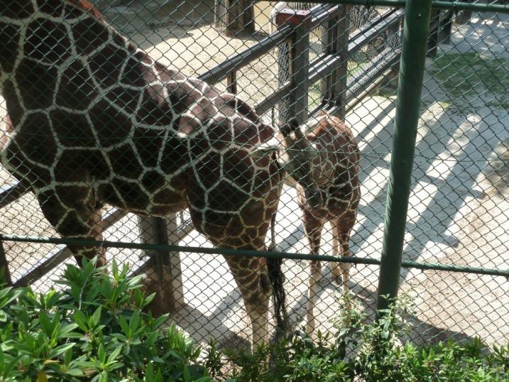 動物園でも椅子が気になる^^_c0152341_1493137.jpg