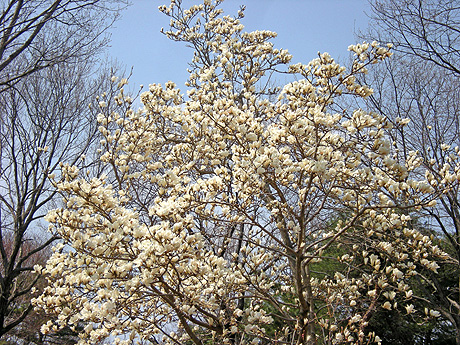 4月25日 赤城自然園 セゾンガーデンいろいろ_a0001354_22102740.jpg