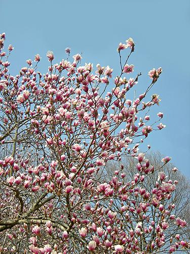 4月25日 赤城自然園 セゾンガーデンいろいろ_a0001354_22105163.jpg