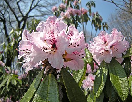 4月25日 赤城自然園 セゾンガーデンいろいろ_a0001354_22131775.jpg